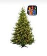 Multi-Color Christmas Trees